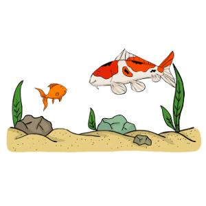 Keeping koi carp with goldfish