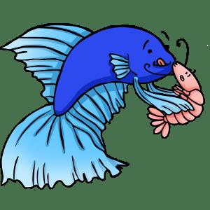 Do betta fish eat shrimp?