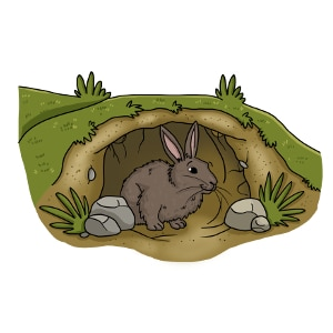 Where do rabbits live?